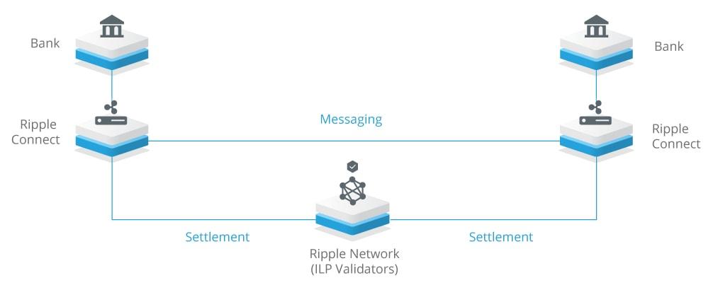 réseau ripple